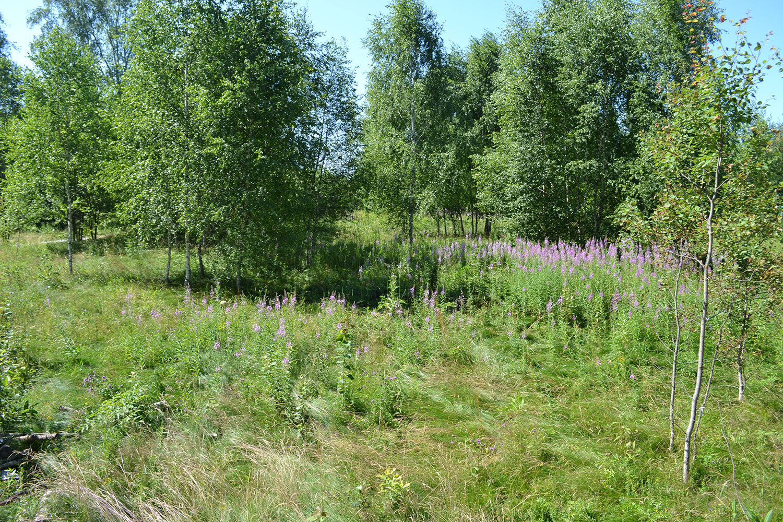 Земельный участок в деревне Назимиха Щелковский район