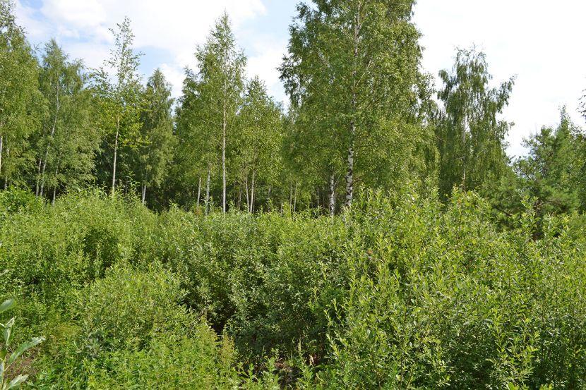 Земельный участок СНТ «Дорожник», Щелковский район
